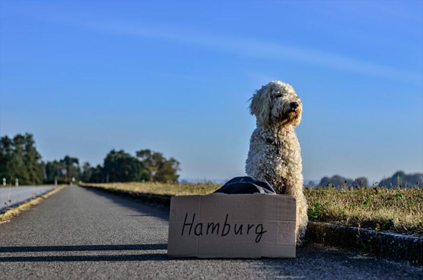 Vacationing with a dog