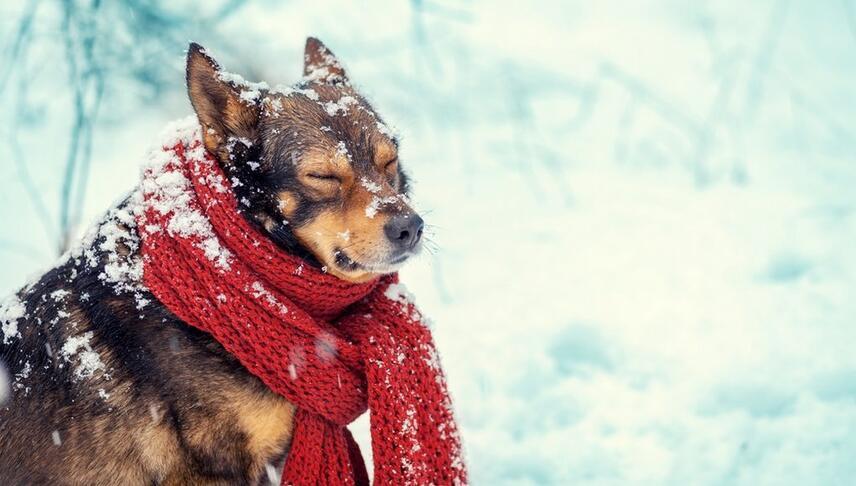Pies zimową porą