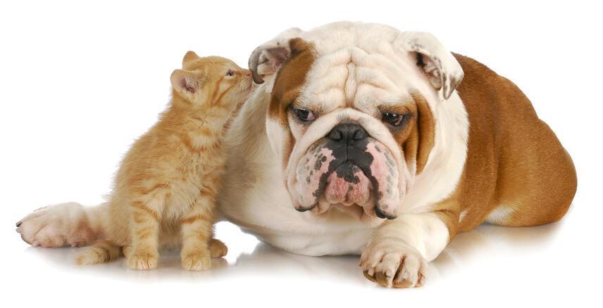 Kot i pies pod jednym dachem
