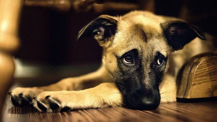 Grafika do artykułu - WORLDPETNET - Co chce Ci powiedzieć Twój pies?