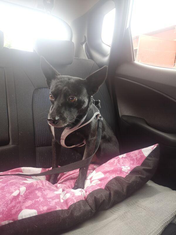 MILUS - Missing pet photo