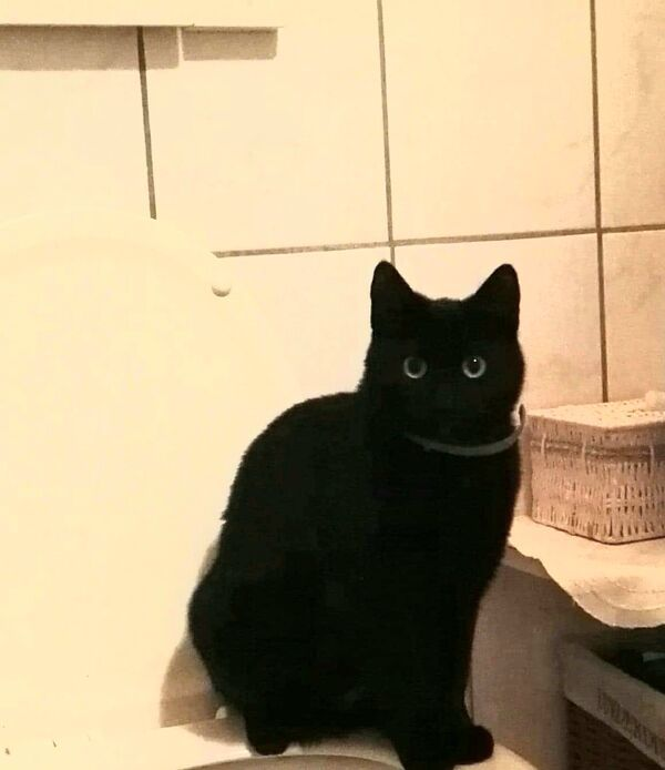 LALA - Zdjęcie zaginionego zwierzęcia