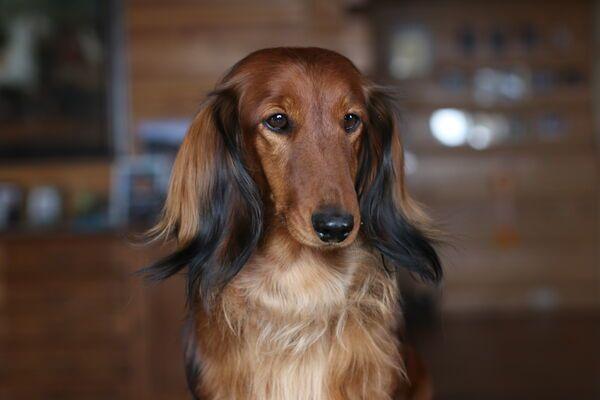 DAISY - Zdjęcie zaginionego zwierzęcia