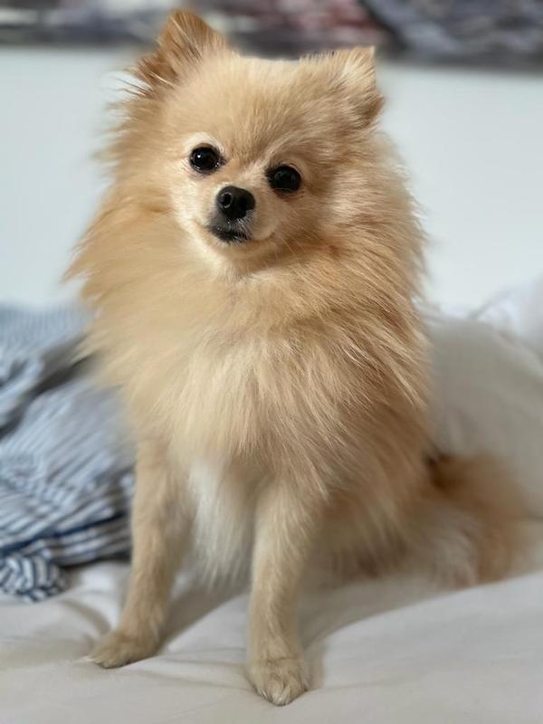 LOLA - Foto des vermissten Tieres