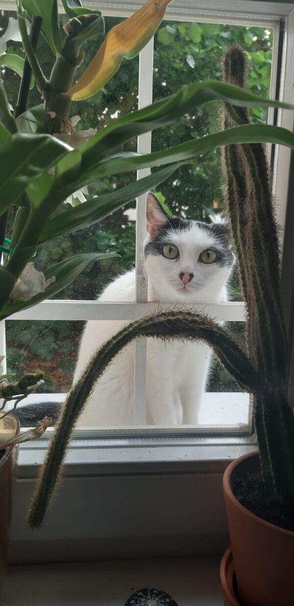PISHI - Zdjęcie zaginionego zwierzęcia