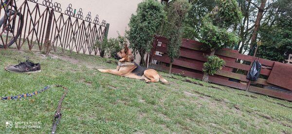 AZAR - Zdjęcie zaginionego zwierzęcia