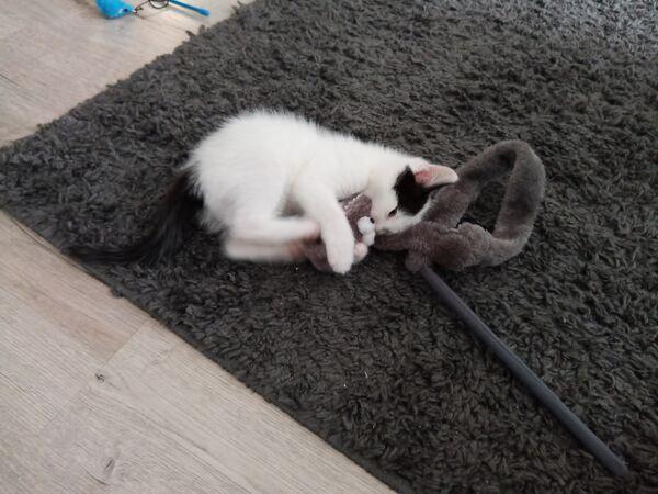 COCO - Missing pet photo