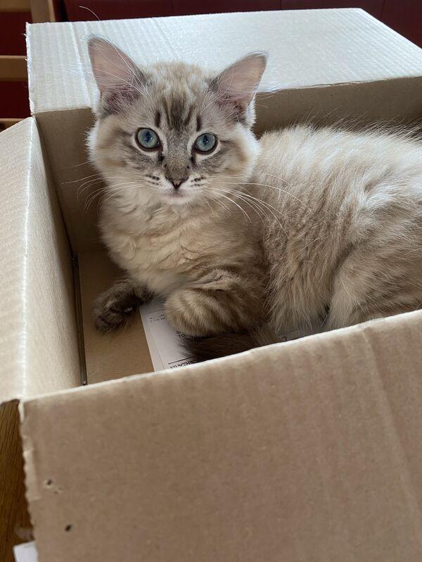 CATIA - Zdjęcie zaginionego zwierzęcia