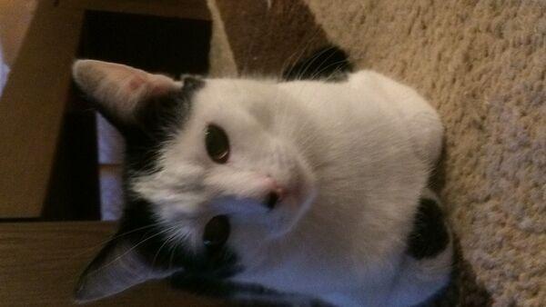 PRIMO - Zdjęcie zaginionego zwierzęcia