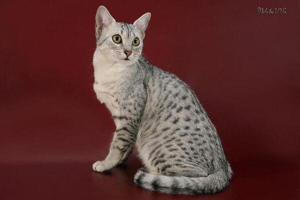 KAMYK - Missing pet photo