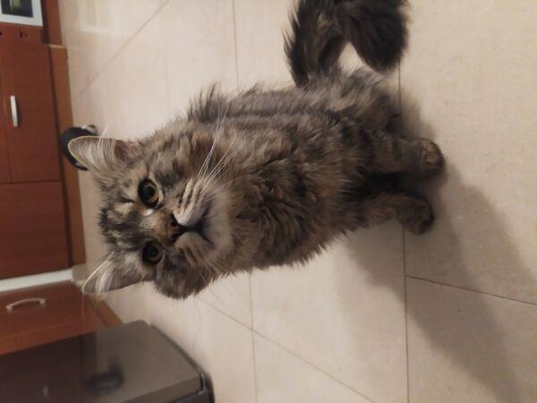 TYGRYS - Missing pet photo