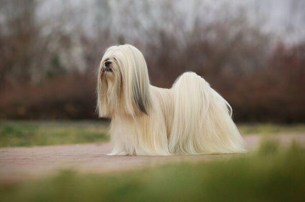 MADDOC - Missing pet photo