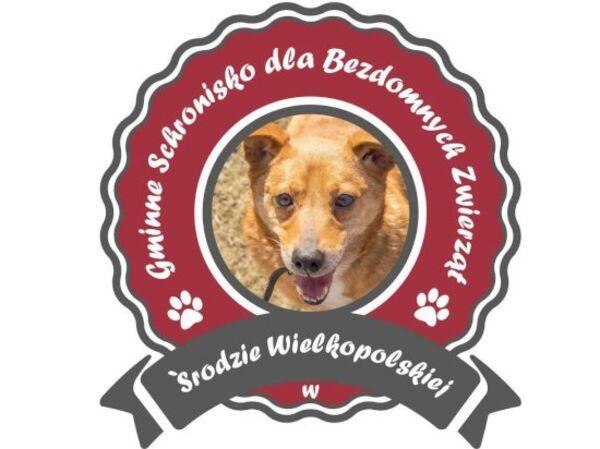 GMINNE SCHRONISKO DLA BEZDOMNYCH ZWIERZĄT - Shelter logo – WORLDPETNET