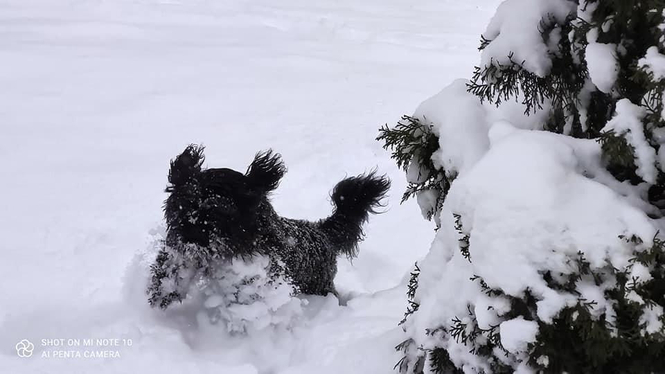 SWEET DOGS Promowane hodowle - WORLDPETNET #12