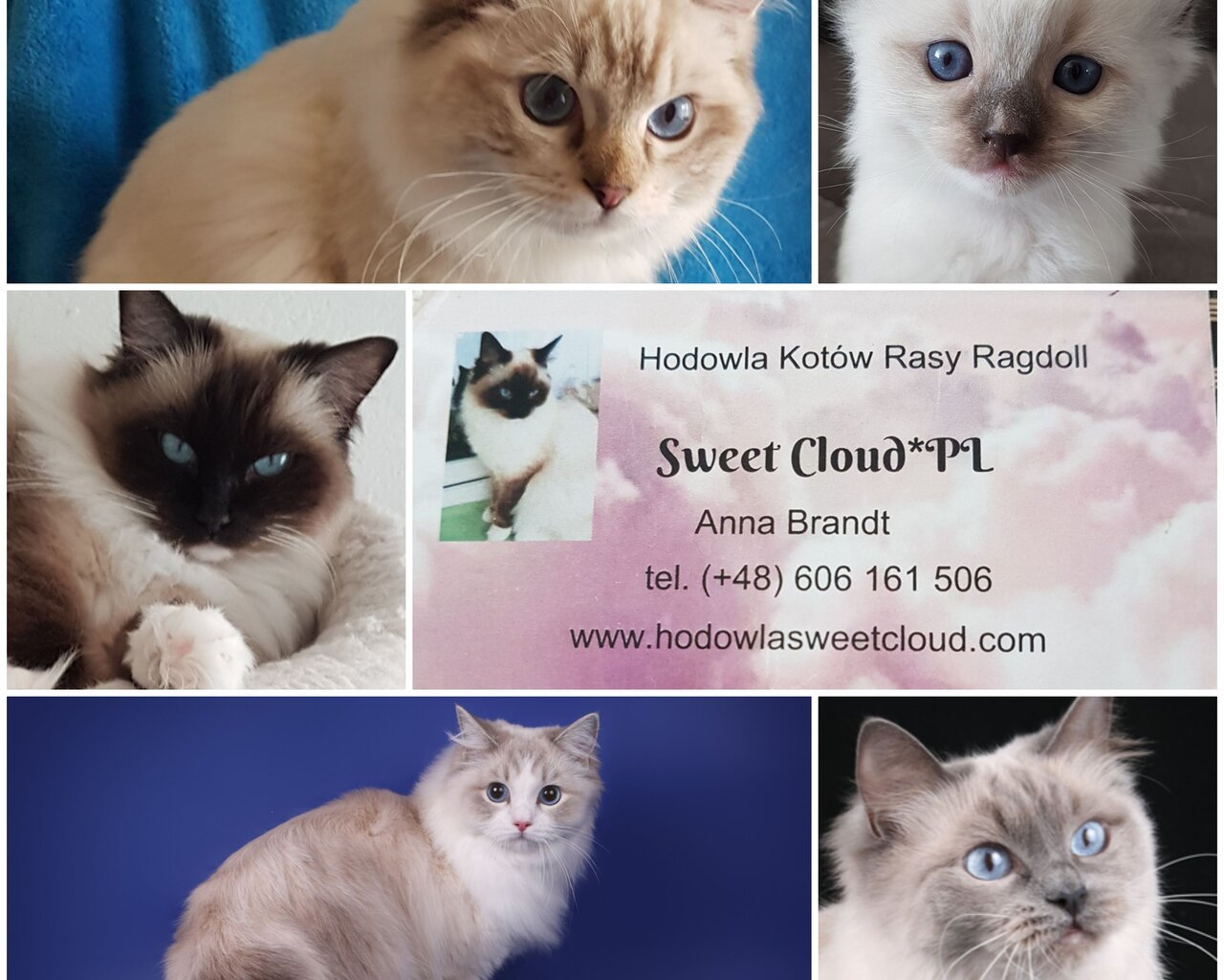 SWEET CLOUD*PL Promoted breeding centres – WORLDPETNET #12