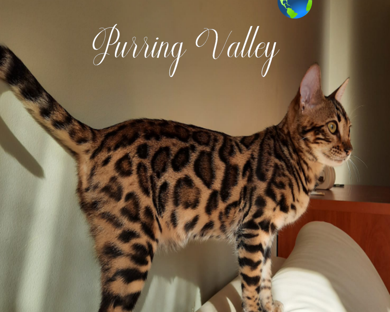 PURRING VALLEY*PL Promowane hodowle - WORLDPETNET #12