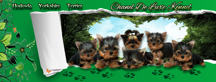 CHANEL DE LUXE KENNEL Promoted breeding centres – WORLDPETNET #12