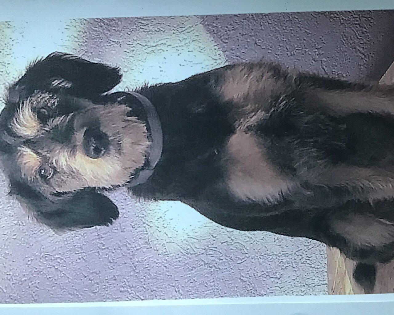 LOLA Zdjęcie zaginionego zwierzęcia #11