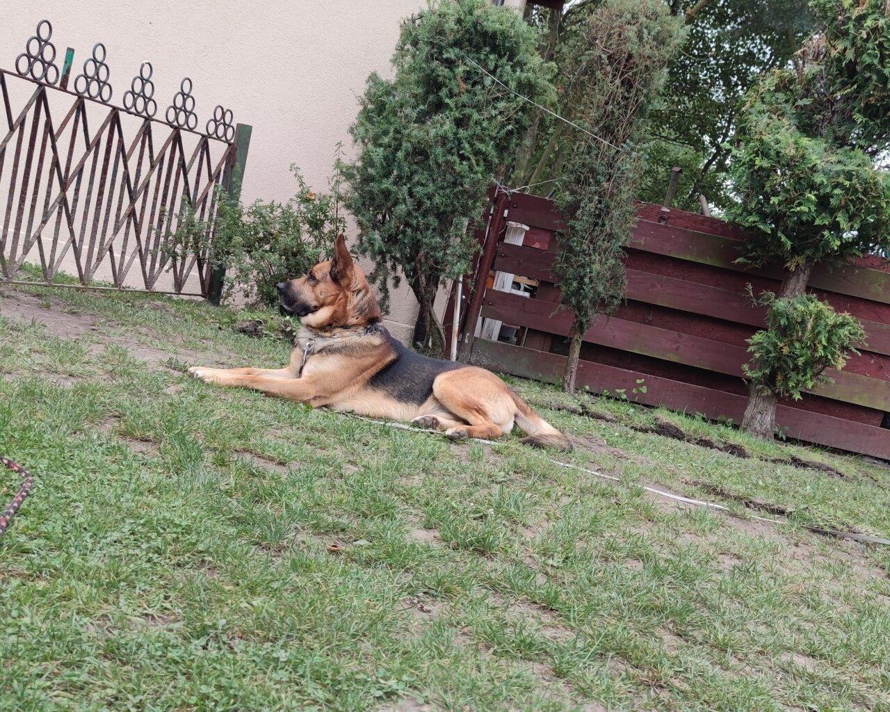 AZAR Zdjęcie zaginionego zwierzęcia #11