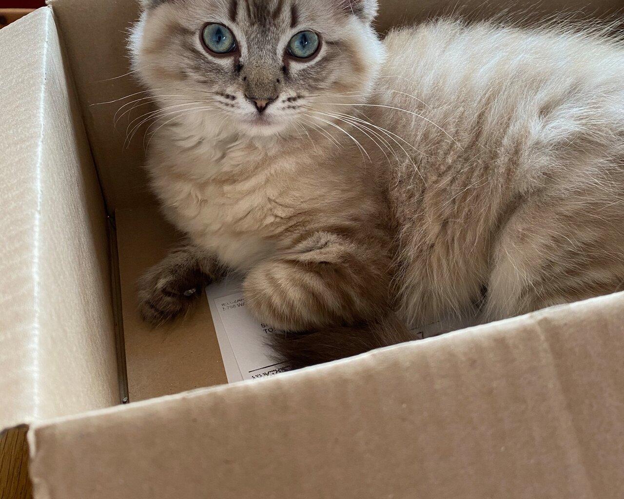 CATIA Zdjęcie zaginionego zwierzęcia #11