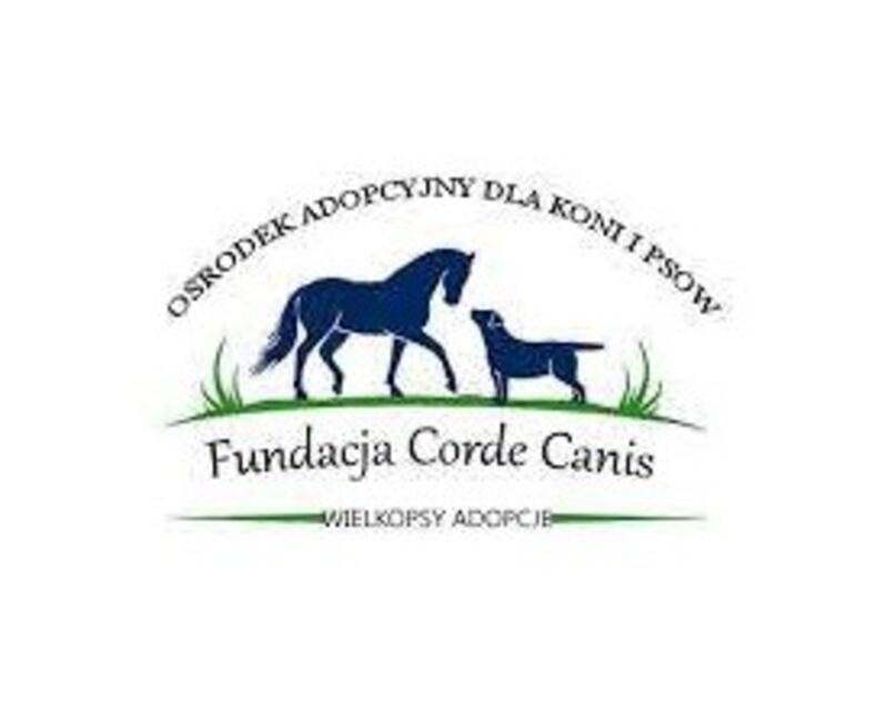 FUNDACJA CORDE CANIS - WIELKOPSY ADOPCJE - animal-shelter-worldpetnet - #15