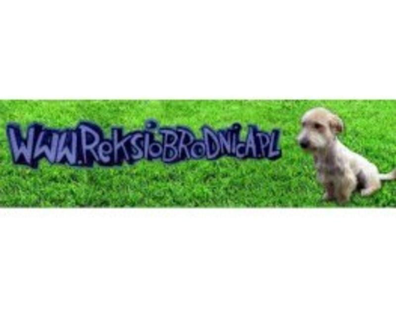 SCHRONISKO DLA ZWIERZĄT W BRODNICY - animal-shelter-worldpetnet - #15