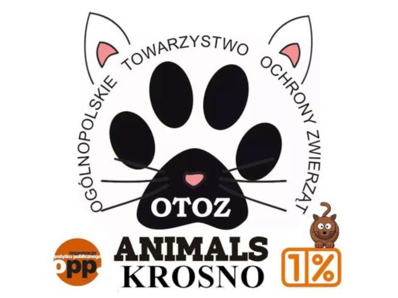 PRZYTULISKO DLA KOTÓW KOCIARNIA OTOZ ANIMALS - schronisko-dla-zwierzat-worldpetnet - #15