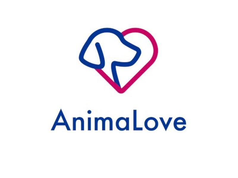 FUNDACJA OCHRONY ZWIERZĄT ANIMALOVE - animal-shelter-worldpetnet - #15