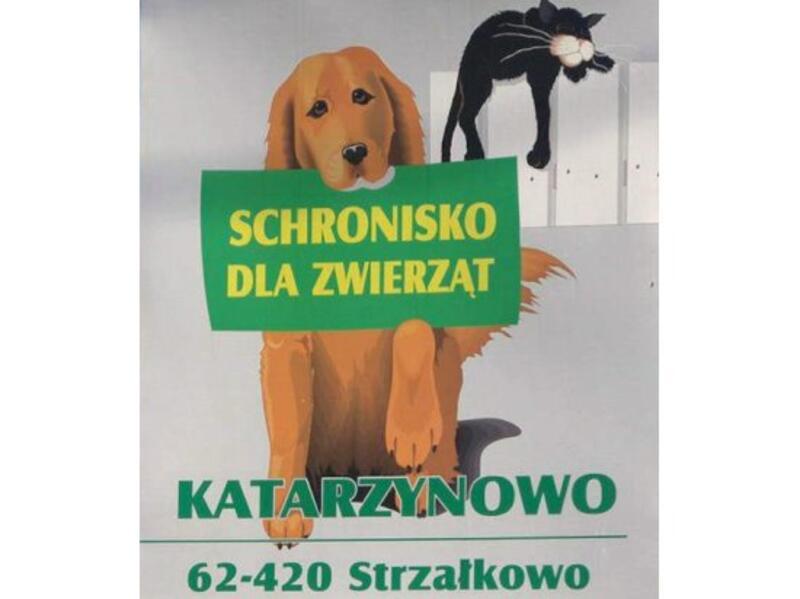 SCHRONISKO DLA BEZDOMNYCH ZWIERZĄT - animal-shelter-worldpetnet - #15