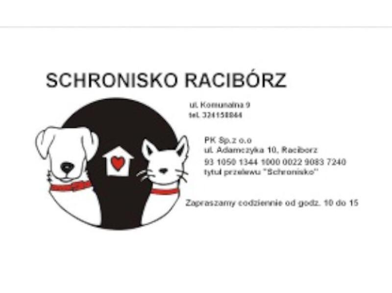 SCHRONISKO DLA ZWIERZĄT W RACIBORZU - animal-shelter-worldpetnet - #15
