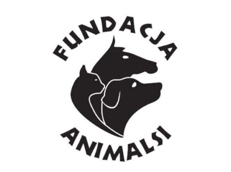 """FUNDACJA """"ANIMALSI"""" SCHRONISKO DLA ZWIERZĄT W KOŚCIERZYNIE - animal-shelter-worldpetnet - #15"""