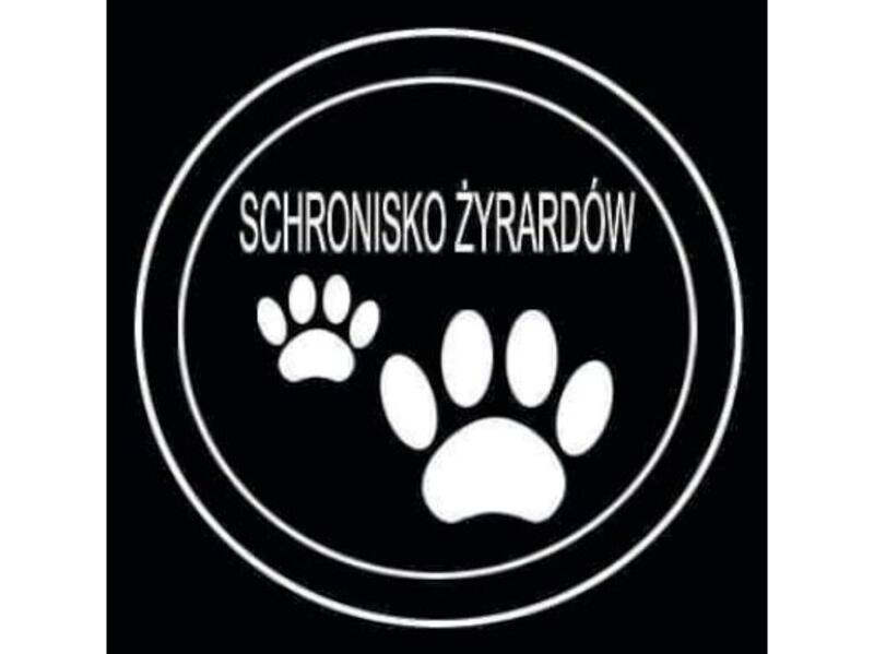SCHRONISKO DLA BEZDOMNYCH ZWIERZĄT W ŻYRARDOWIE  - schronisko-dla-zwierzat-worldpetnet - #15