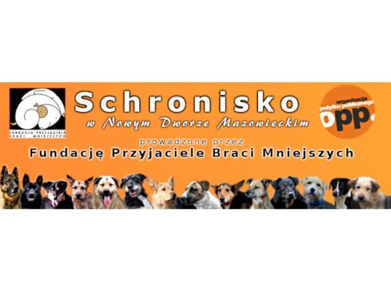 SCHRONISKO W NOWYM DWORZE MAZOWIECKIM - Tierheim-Worldpetnet- #15