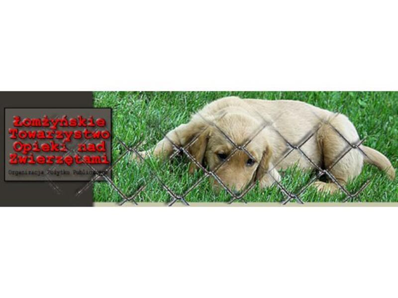 SCHRONISKO ARKA  - animal-shelter-worldpetnet - #15