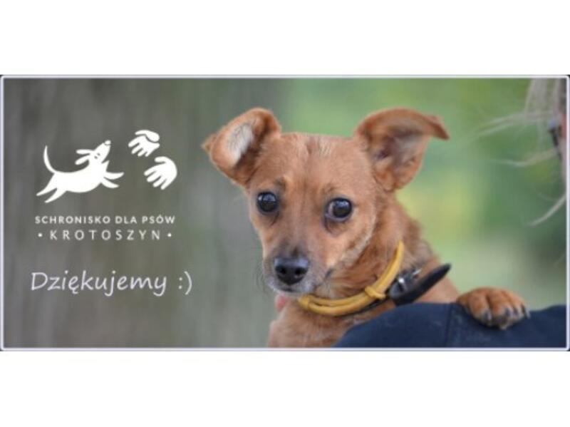 SCHRONISKO DLA BEZDOMNYCH ZWIERZĄT W KROTOSZYNIE - animal-shelter-worldpetnet - #15