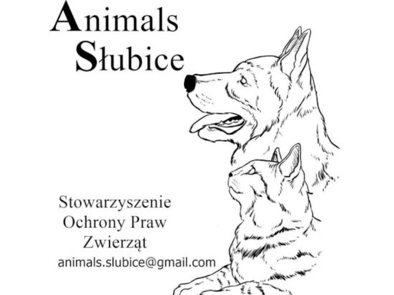 STOWARZYSZENIE OCHRONY PRAW ZWIERZĄT ANIMALS SŁUBICE - animal-shelter-worldpetnet - #15