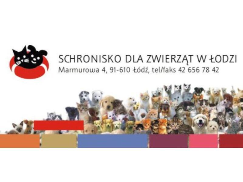 SCHRONISKO DLA ZWIERZĄT W ŁODZI - refuge-pour-animaux-worldpetnet - #15