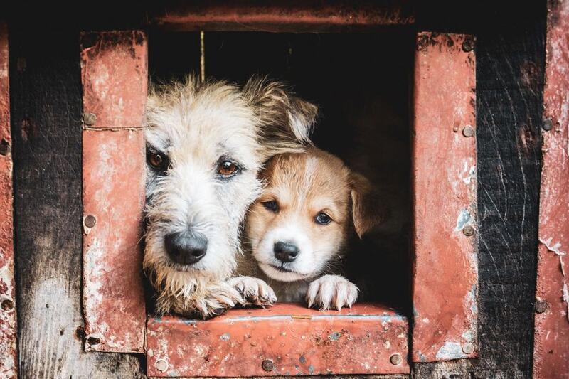 FUNDACJA CENTRUM OCHRONY ŚRODOWISKA  SCHRONISKO CHRCYNNO - animal-shelter-worldpetnet - #15