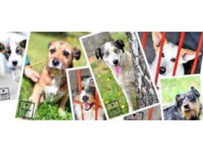 SCHRONISKO DLA ZWIERZĄT W INOWROCŁAWIU - animal-shelter-worldpetnet - #15