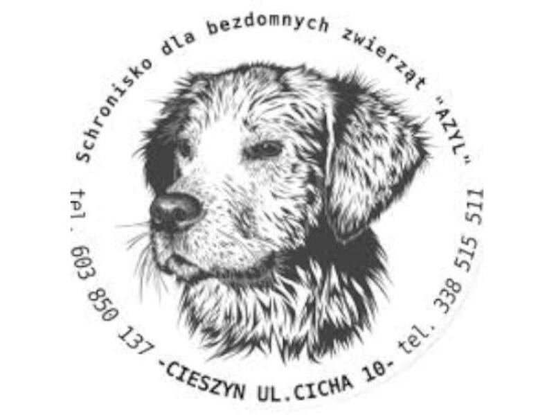"""SCHRONISKO DLA ZWIERZĄT W CIESZYNIE """"AZYL""""   - schronisko-dla-zwierzat-worldpetnet - #15"""