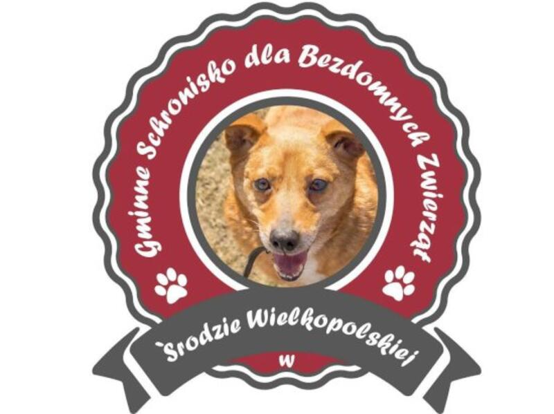 GMINNE SCHRONISKO DLA BEZDOMNYCH ZWIERZĄT - Tierheim-Worldpetnet- #15