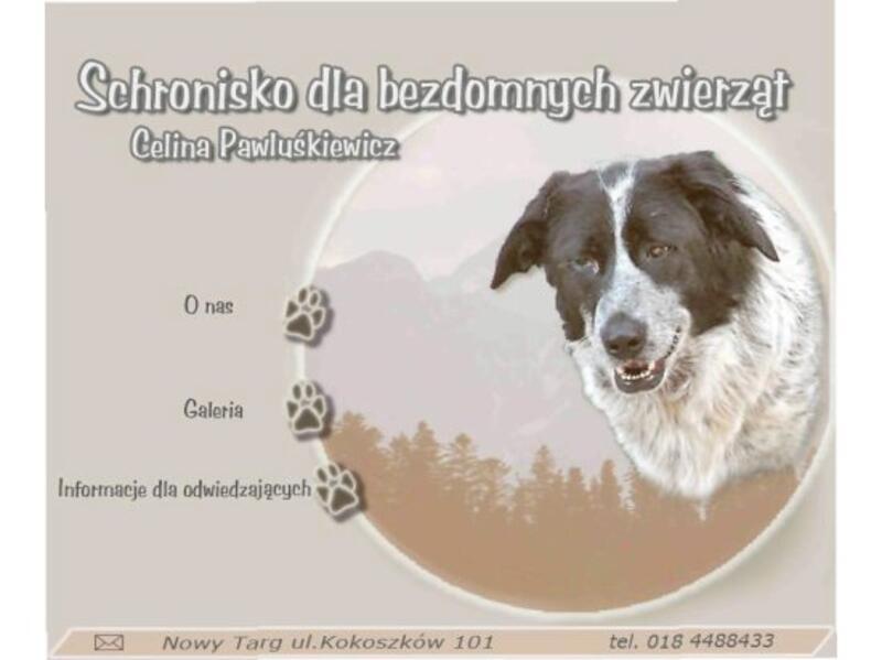 SCHRONISKO DLA BEZDOMNYCH PSÓW W NOWYM TARGU - schronisko-dla-zwierzat-worldpetnet - #15