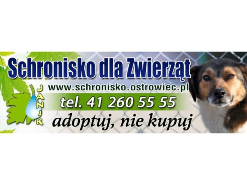 """SCHRONISKO DLA ZWIERZĄT """"JANIK"""" - schronisko-dla-zwierzat-worldpetnet - #15"""