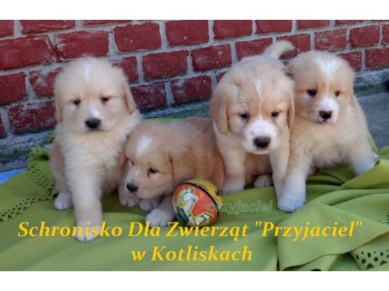 """SCHRONISKO DLA ZWIERZĄT """"PRZYJACIEL"""" - animal-shelter-worldpetnet - #15"""