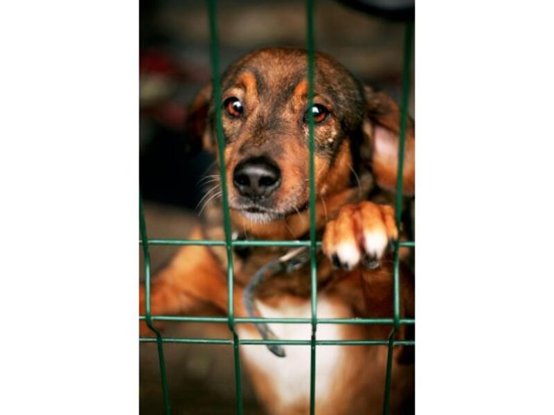 ŻORSKI AZYL DLA BEZDOMNYCH ZWIERZĄT - animal-shelter-worldpetnet - #15
