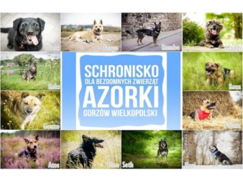 """SCHRONISKO DLA ZWIERZĄT W GORZOWIE WLKP """"AZORKI"""" - Tierheim-Worldpetnet- #15"""