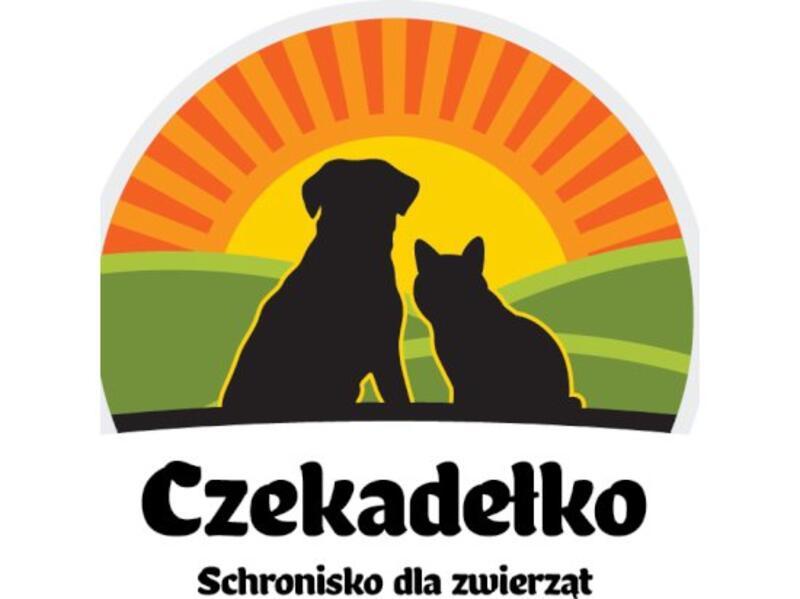 """SCHRONISKO DLA ZWIERZĄT """"CZEKADEŁKO"""" - schronisko-dla-zwierzat-worldpetnet - #15"""