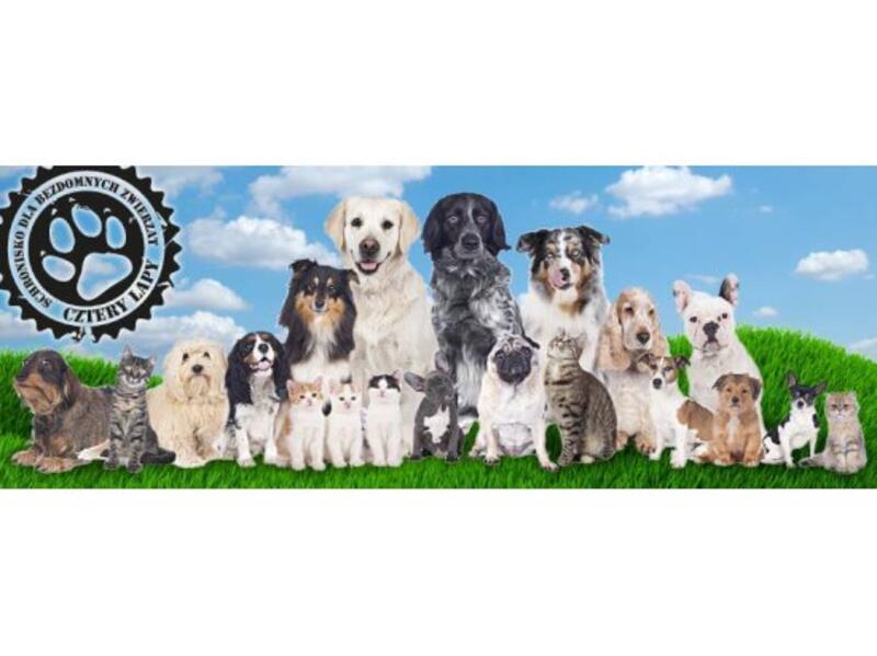 SCHRONISKO DLA ZWIERZĄT W SZCZYTNIE - animal-shelter-worldpetnet - #15