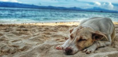 Pies na plaży – wypoczynek czy problem?
