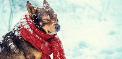 Dogs in the winter